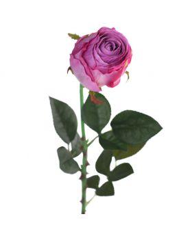 SINGLE ROSE/PURPLE