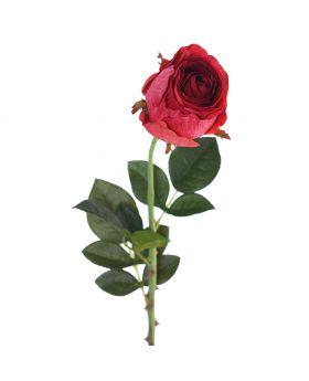 SINGLE ROSE/RED