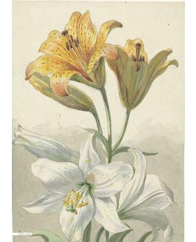 VINTAGE ILLUSTRATION OF FLOWERS,RIJKSMUS 133124XL (4 PANELS)