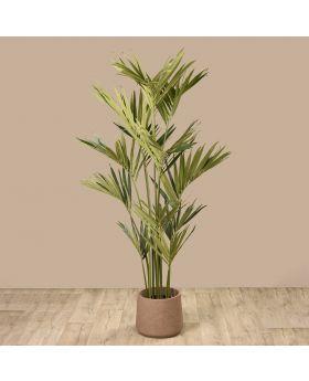 KENTIA PALM TREE GREEN 210CM