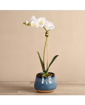 Santa Fe Orchid Arrange/ Blue Pot/Small