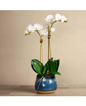Santa Fe Orchid Arrange/Blue Pot/Medium