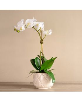 Stella Orchid Arrangemen/White Pot/Small