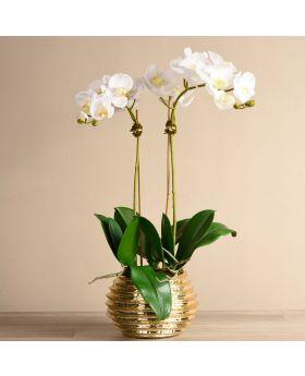 Medium Size Orchid In Gold Vase