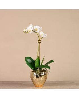 Small Size Orchid In Gold Vase