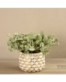 Potted Silver Fall Plant