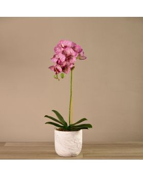 Small Orchid Arrange Marble Looking Pot