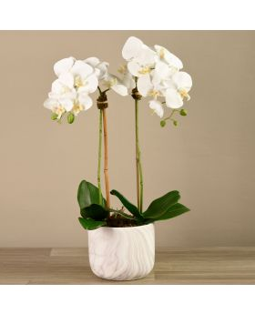 Medium Size Orchid In Marble Looking Pot 3787-10-1