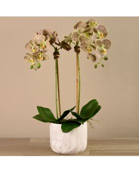 Medium Size Orchid In Marble Looking Pot