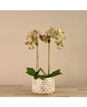 Medium Size Orchid In White/Gold Pot
