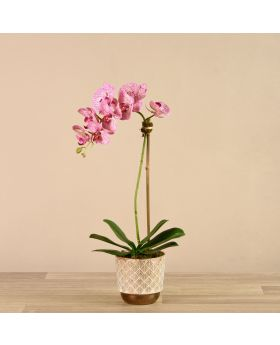 Small Orchid Arrangemnt White/Bronze Pot