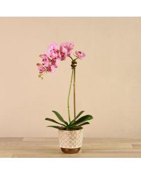 Small Orchid Arrangemnt White/Bronze Pot