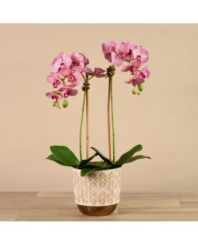 Medium Orchid Arrangemt White/Bronze Pot