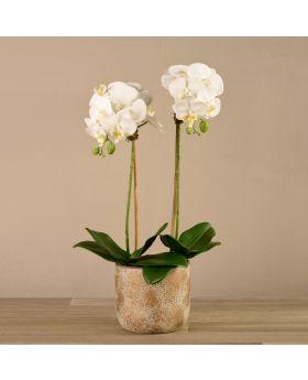 Medium Orchid Arrangement Matt Gold Pot 60X40 Cm