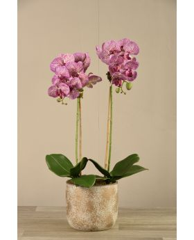 Medium Orchid Arrangement Matt Gold Pot