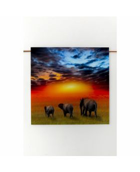 Picture Glass Savanne Elefants 100X100Cm