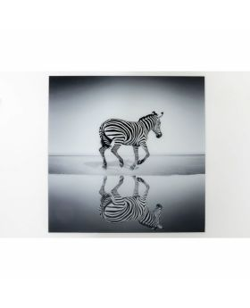 Picture Glass Savanne Zebra 120X120Cm