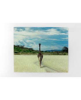 Picture Glass Savanne Giraffe Multicolor