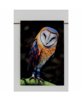 PICTURE GLASS  CUTE OWL 120X80CM