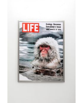 PICTURE FRAME MAGAZIN MONKEY 83X63CM