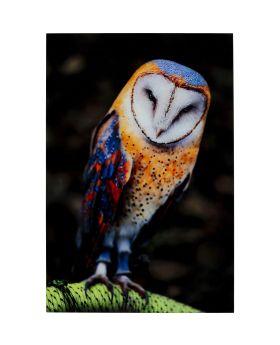 Picture Glass Cute Owl 120X80Cm