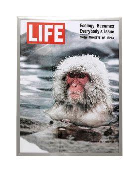 Picture Frame Magazin Monkey 83X63Cm