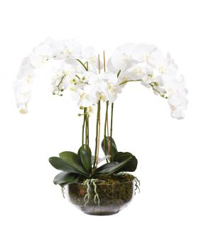 ORCHID ARRANGEMENT IN GLASS VASE/WHITE