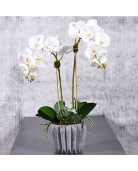LARGE ORCHID IN CEMENT VASE/WHITE