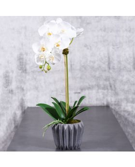 MEDIUM ORCHID IN CEMENT VASE/WHITE