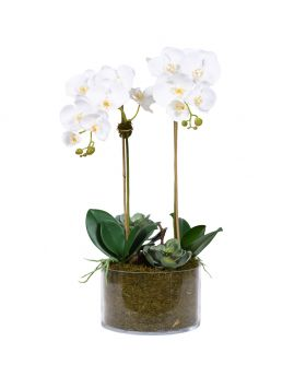 Orchid&Succulent Round Glass Vase/White