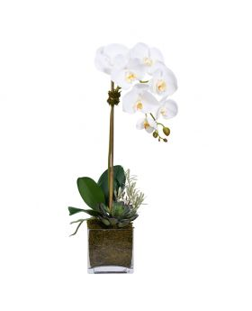 S ORCHID&SUCCULENT SQUARE GLASVASE/WHITE