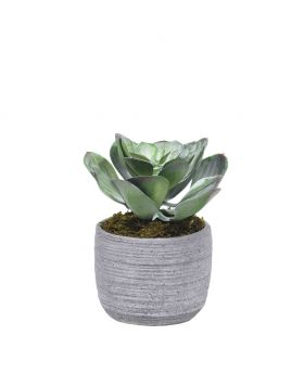Small Succulent In Cement Pot/Green