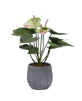 Anthurium In Cement Vase Green