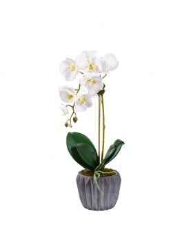 Small Orchid In Cement Vase/White
