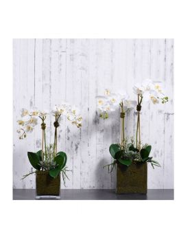 M Orchid&Succulent Square Glasvase/White