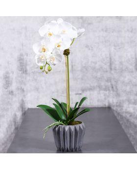 MEDIUM ORCHID IN CEMENT VASE/WHITE