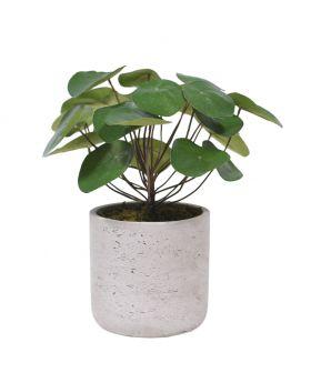 PANCAKE PLANT. 2296-90 + 2215-04 GREEN